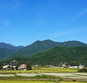 蕎麦の花 ~中山高原~