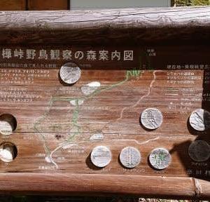 奈川のタカ渡り ~白樺峠~