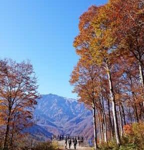 信州の秋 ねずこの森 ~白馬岩岳~