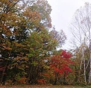 紅葉と滝 ~松本市 乗鞍高原~
