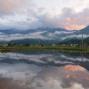 水田に映る風景と久しぶりのにゃんず