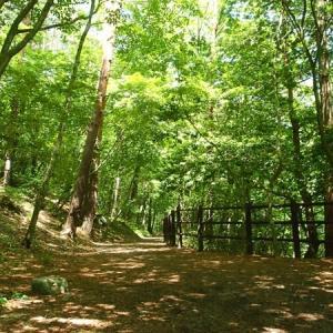 気ままにお散歩 ~烏川渓谷緑地の人面岩~