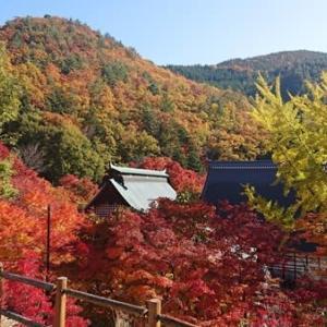 秋晴れと鮮やかな紅葉 霊松寺