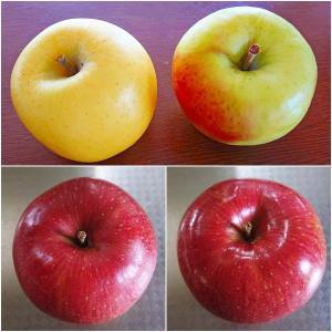 幻のりんご 名月&信州りんご