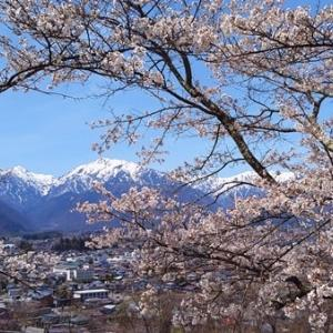 桜2021 山岳博物館とカモシカ&雷鳥