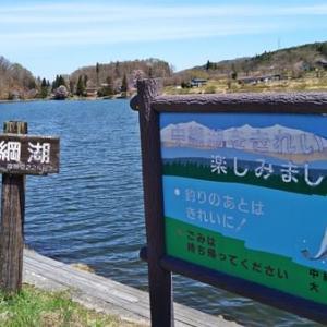 桜2021 中綱湖の桜&農具川の芝桜