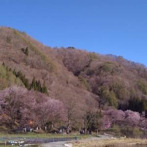 湖面に映る桜&万華鏡のような風景 中綱湖
