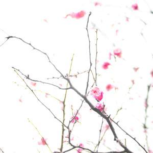 柴又の梅や、早い桜。そして矢切の菜の花など。