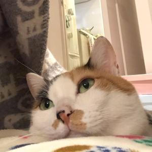ネコ食べる?。