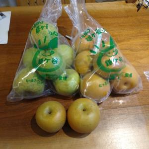石井農園さんで梨を買いました