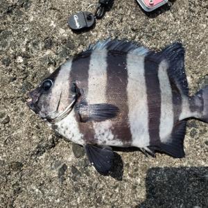 楽しみな、浜田に釣に行って来たが、、猛暑で死にそうだった~~