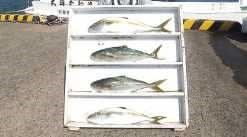 他の人がこんなに釣れているから、、浜田に釣に行くのをメチャ悩む・・どうしようか~~