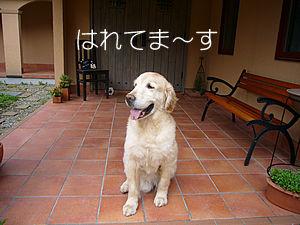 本当に久しぶりに週末が晴れそうな那須高原です