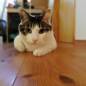 (続)安全な猫砂