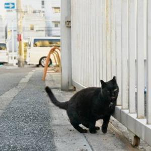白バックの黒猫