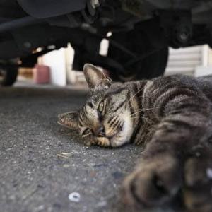 今日は車の下