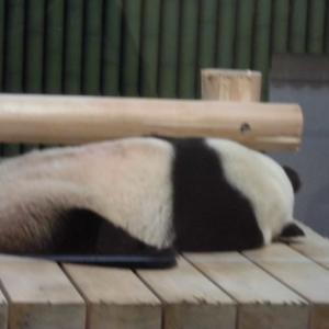 パンダのいる動物園