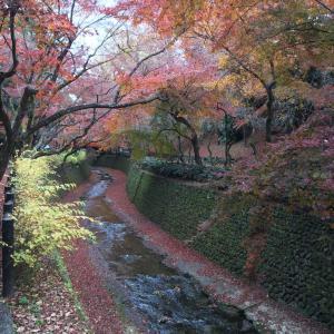 京都満喫中2