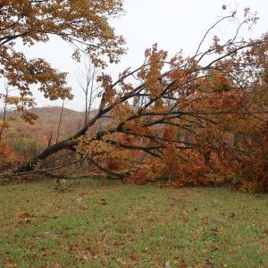 倒木、大風の影響か???