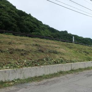 堤防の草刈!