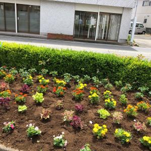 ●千倉駅前ロータリーにお花を植えました♪