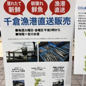 ●「千葉そごう」で千倉漁港直送のお魚が販売されてます♪