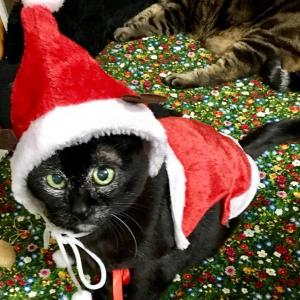 もうすぐクリスマスだね