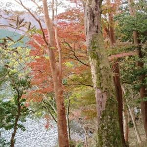 ブログを読んで九頭龍神社に行かれた方からのメール。