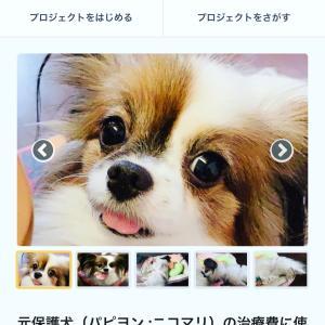 【クラウドファウンディング】保護犬ニコマリちゃん