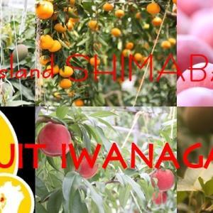 長崎県島原半島 夏の絶品フルーツ・・・・フルーツいわなが