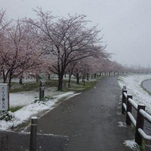 関東平野部に積雪