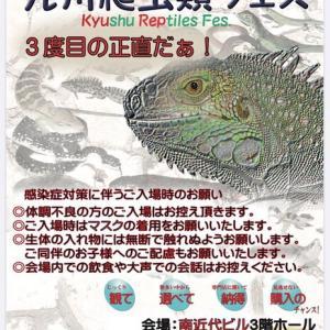イベント情報!!~九州爬虫類フェス~