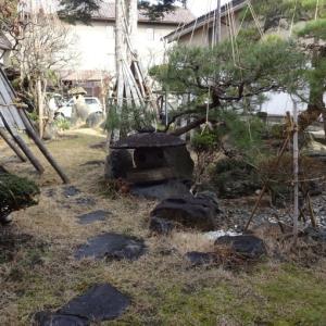 雪のない新春のお庭
