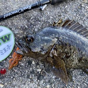 ワンタックルでこんな釣りにハマってます(笑)