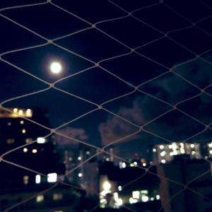 満月の夜は血が騒ぐのかな?