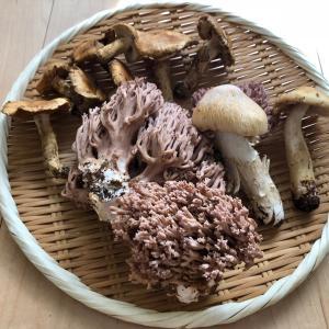 ◆3種の天然きのこ 調理してみました!【覚え書きレシピ】