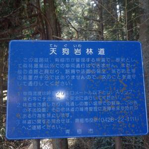 続・青梅の林道