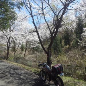 桜と林道と