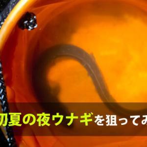 【釣果報告】埼玉で初夏の夜鰻(ウナギ)を狙ってみた結果【8月初戦】