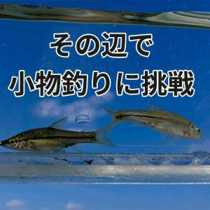東京から30分の野池・用水路で小物釣りをやってみたら帰りたくなくなった
