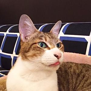 【はじめての猫との暮らし方教室】開催!! ~豊中市保健所~