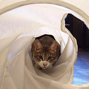 トンネル猫。