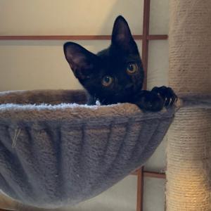 ☆明日11月10日(日)は猫さんたちの譲渡会です!!☆