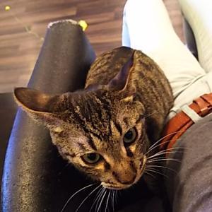 コショ猫。