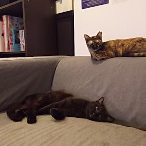 おチビにゃんたちの譲渡会・開催のお知らせ&のんびり猫。