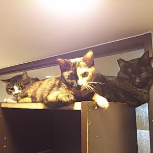 店バイトのおチビ猫たち。