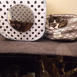アパート猫。