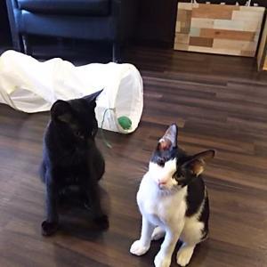 物知り猫。