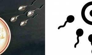 受精のイメージ・イラストに似てるっ!