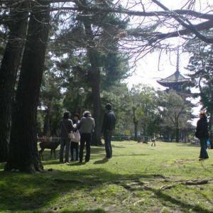 Holiday in Nara park